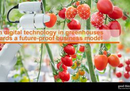 Whitepaper 'WITH DIGITAL TECHNOLOGY IN GREENHOUSES TOWARDS A FUTURE-PROOF BUSINESS MODEL'